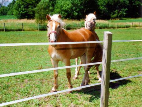 recinto elettrico cavalli